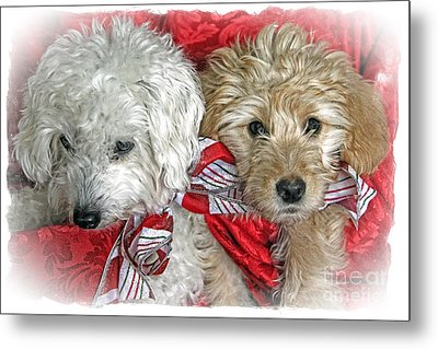 Christmas Puppy Metal Print by Bob Hislop