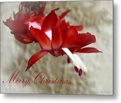 Christmas Red Beauty Card Metal Print