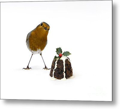 Christmas Robin Metal Print by Tim Gainey