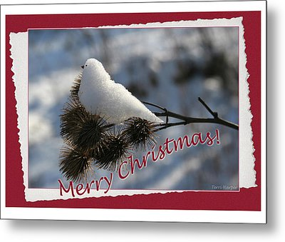 Christmas Snow Bird Metal Print by Terri Harper