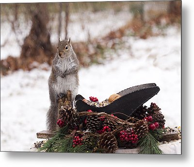 Christmas Squirrel Metal Print