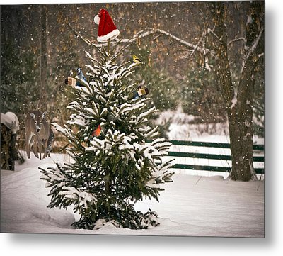 Christmas Tree. Metal Print by Kelly Nelson