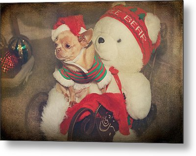 Christmas Zoe Metal Print by Laurie Search