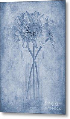 Chrysanthemum Cyanotype Metal Print by John Edwards