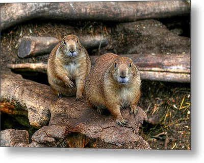 Chubby Pair Metal Print by Larry Trupp