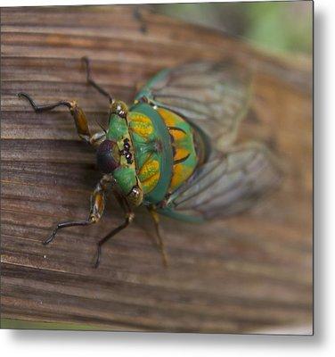 Green Whizzer Cicada Metal Print
