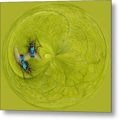 Circle Of Flies Metal Print by Jean Noren