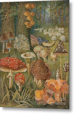 Citizens Of The Land Of Mushrooms Metal Print by Science Source