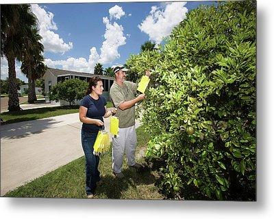 Citrus Greening Disease Research Metal Print