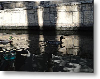 Metal Print featuring the photograph City Ducks by Shawn Marlow