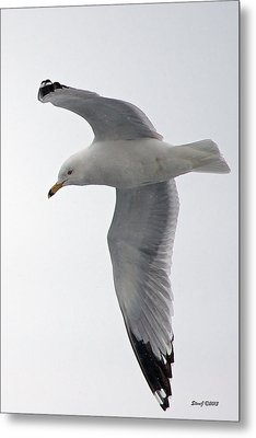 City Park Gull Metal Print