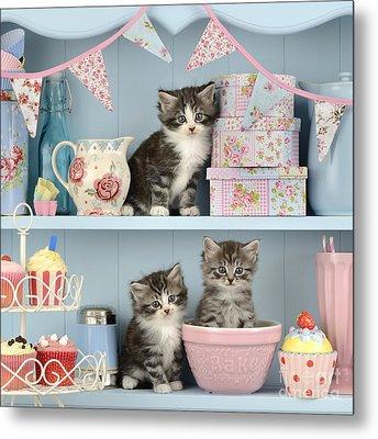 Baking Shelf Kittens Metal Print by Greg Cuddiford