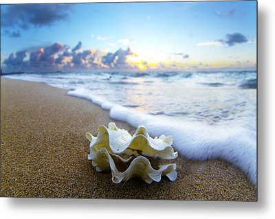 Clam Foam Metal Print by Sean Davey