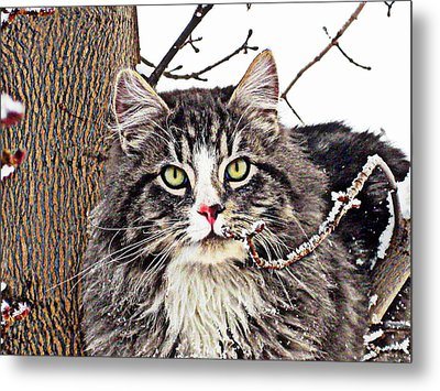 Metal Print featuring the photograph Clancy by Kathy Bassett