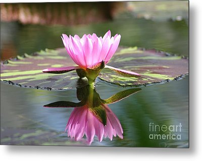 Clarity Metal Print by Mary Lou Chmura