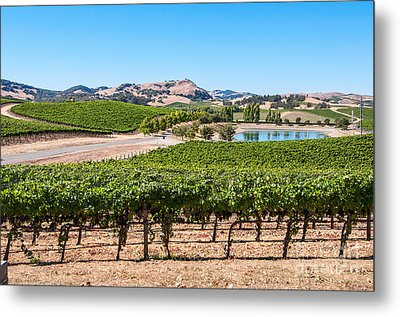 Classic Napa - Cuvaison Winery And Vineyard In Napa Valley. Metal Print by Jamie Pham