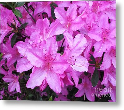 Metal Print featuring the photograph Azaleas by Donna Dixon