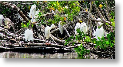 Cleaning Time Metal Print by Will Boutin Photos