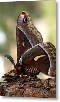 Clem The Moth Metal Print