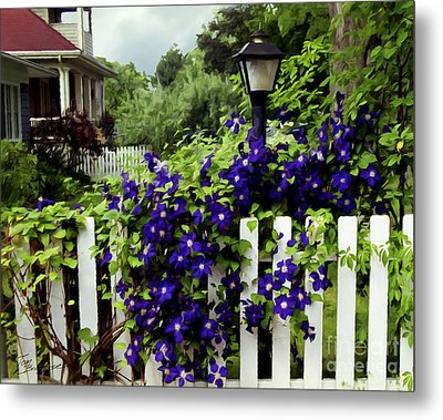 Clematis On White Picket Fence Painting Effect Metal Print