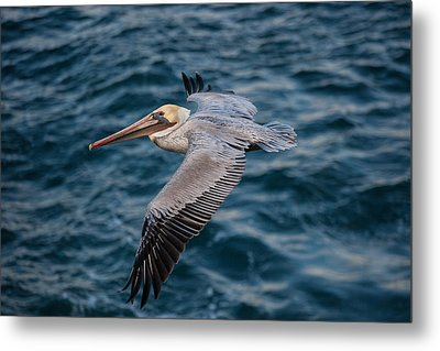 Metal Print featuring the photograph Cliff Cruising by Sonny Marcyan