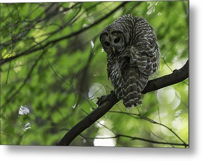 Cloaked In Silence Metal Print by Everet Regal
