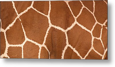 Close-up Of A Reticulated Giraffe Metal Print