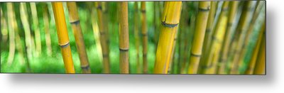 Close-up Of Bamboo, California, Usa Metal Print by Panoramic Images