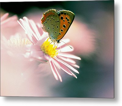 Close Up Of Butterfly On Flower Metal Print