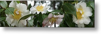 Close-up Of Details Of Camellia Flowers Metal Print by Panoramic Images