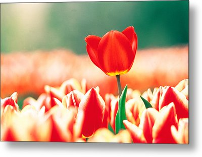 Close Up Of Flower Head Rising From Metal Print
