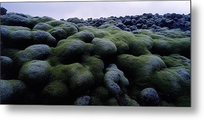 Close-up Of Moss On Rocks, Iceland Metal Print by Panoramic Images