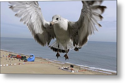 Closeup Of Hovering Seagull Metal Print