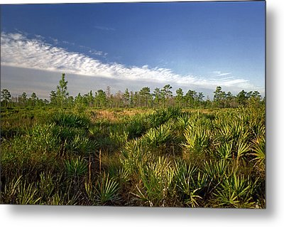 Cloud Line And Palmetto. Triple N Ranch.   Metal Print by Chris  Kusik