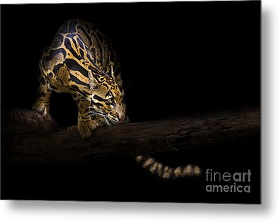 Clouded Existence Metal Print by Ashley Vincent