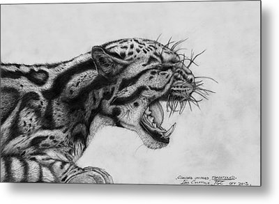 Clouded Leopard Theatened. Metal Print by Ian Cuming