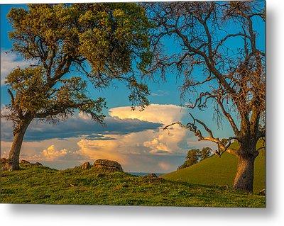 Clouds Between Trees Metal Print