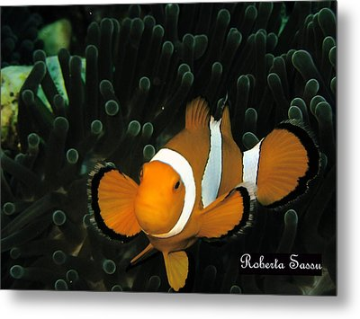 Clown Fish Metal Print by Roberta Sassu