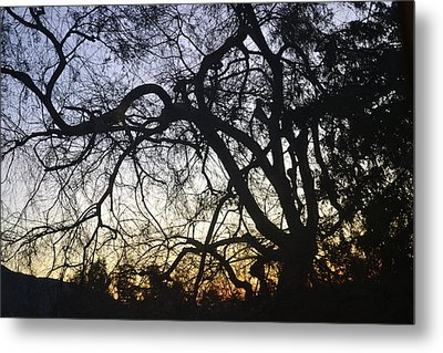 Cluttered Sunrise Metal Print by Kiros Berhane