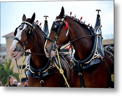 Metal Print featuring the photograph Clydesdales 2 by Amanda Vouglas
