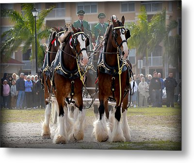 Metal Print featuring the photograph Clydesdales 4 by Amanda Vouglas