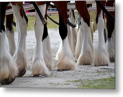 Metal Print featuring the photograph Clydesdales 5 by Amanda Vouglas
