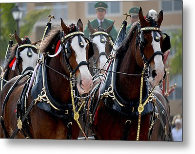 Metal Print featuring the photograph Clydesdales by Amanda Vouglas