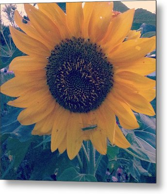 Metal Print featuring the photograph Co-existing by Thomasina Durkay