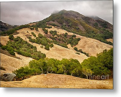 Coast Hills Metal Print by Alice Cahill