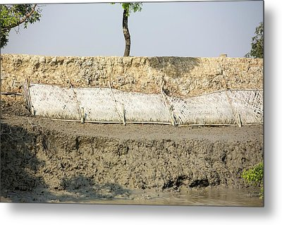 Coastal Flood Defences In The Sunderbans Metal Print by Ashley Cooper