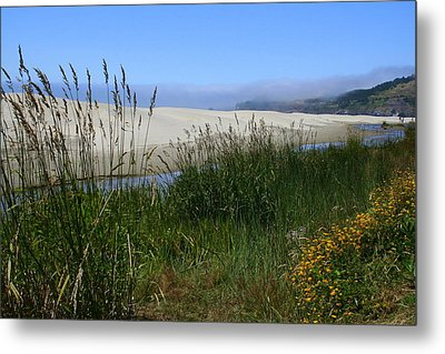 Coastal Grasslands Metal Print