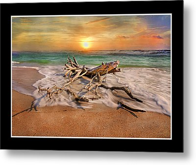 Coastal Morning  Metal Print by Betsy Knapp