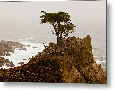 Coastline Cypress Metal Print by Melinda Ledsome