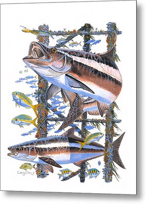 Cobia Hangout Metal Print by Carey Chen